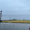 雨降りの1日でした ─ 本日の定点観測地 ─