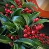 お正月飾り 万両の赤い実