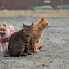 猫と犬の関係(4)