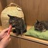 保護猫11匹と暮らすご婦人とお喋り