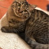飼い猫マロンの私への愛が深すぎる件