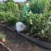 農園日誌20170902 大根と葉物野菜の植え付けを行いました