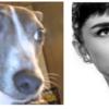 古代エジプト展と人智学と犬