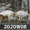 週報 2020W08