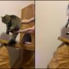 まるでライオンキング!?岩場のキャットタワーを作ってみた