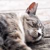 ぐっすり眠れる!睡眠の質を高める方法