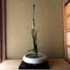 心粧花/菖蒲など