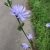 私の好きな道端の草花