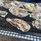 糸島の牡蠣小屋で牡蠣を食べてきました!