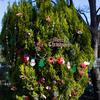 木場公園のクリスマスツリー