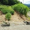 草刈りで病気とマダニ対策