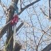 雑木林 伸びすぎた樹木の剪定