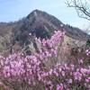 国見岳から御在所、鎌 春のアカヤシオ街道 2014.04.27