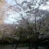 花見と運気アップを兼ねて 春の北海道神宮を散策