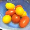 トマトとタコの宝石?!