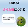 【鳥さん】オウム病について【鳥から人にうつることがある感染症】