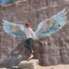 糸島の写真スポットPALM BEACH(パームビーチ)で羽の写真を撮ろう