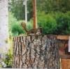 リス、ブラックベア、白頭鷲  2006年8月17日