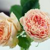 小輪のバラたち
