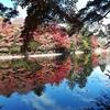 【今週のお題】雲場池の紅葉がすごく美しかったのでお納めください。