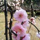 旅行・美術・お花が大好き♪ブログ