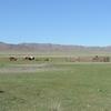 初めてのモンゴル「観光旅行」(9)草原のお昼どき