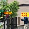 『木の枝を切りながら地主さんとコミュニケーション(^▽^;)』