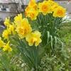 春の訪れ…昼寝のし過ぎ…