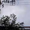 作曲工房 朝の天気 2018-05-19(土)雨上がり(限りなく曇りに近い晴れ)