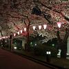 桜巡り2018②  隅田川と千鳥ヶ淵の夜桜