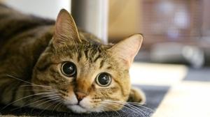 猫ちゃんとおうちでのんびり♪そんなときに使える英語表現