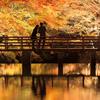 この秋に行ってみたい☆おすすめ紅葉デートスポット