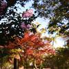 桜と紅葉を同時に見れるとは・・