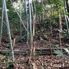 石切り場跡の緑地における保全活動