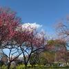 2019.03.31 古河総合公園の花桃