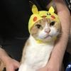 【猫ブログ】ピカチュウがもう1匹??