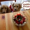 わんこスコップケーキでクリスマス♪