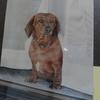 先代犬 ロンリー