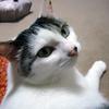 毎度おなじみ、猫ブログ第十三弾と暑い日の晩ご飯……