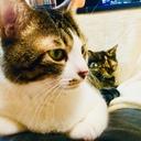 rucat's blog