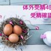 【不妊治療】4回目の体外受精・受精確認と凍結確認
