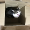 【WOT】戦車猫のお財布を守るスコGさん【戦車猫日記】