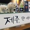 【11月ソウル】大量のドライフルーツを抱えて植物検疫所へ♪これで安心して日本に持ち帰れます