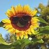 【クレイ・ハーブ】真っ赤な日焼けの対処、4つのステップ