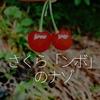 136食目「さくら「ンボ」のナゾ」
