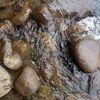鮎蟹川 探索の記