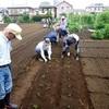 <農業講座日記>枝豆の苗 植え付け(7月24日)