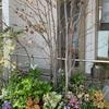 診療所の花々