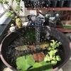 【我が家のビオトープ】格安2千円代で浮上性ソーラー噴水を簡単設置