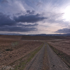 曇りの畑道